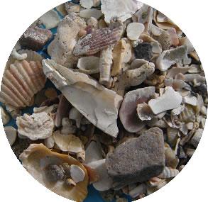 Conchas de ostras y mejillón